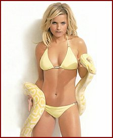 Distraction Celebrity with yellow python